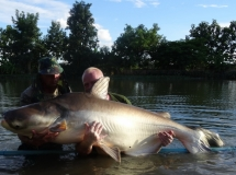 niels-mekong-catfish-3-sept-2013-jpg-re